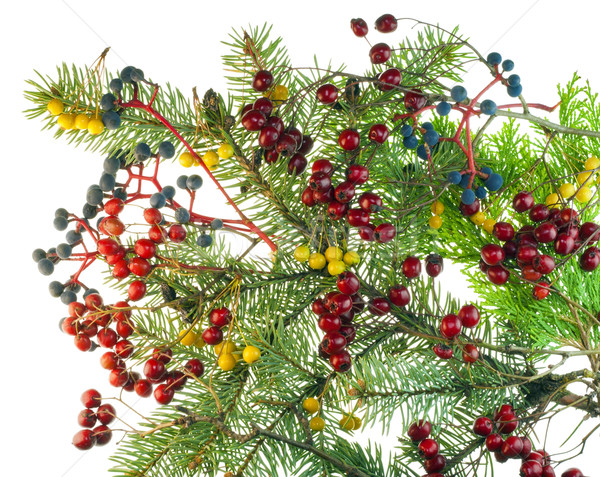 Christmas boeket bessen Rood Blauw Stockfoto © vavlt