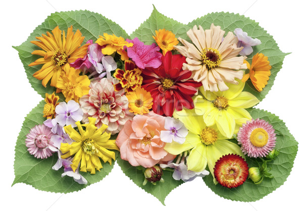 Medál kép virágok növények izolált fű Stock fotó © vavlt