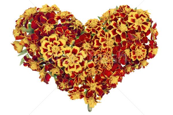 Heart from  French Marigold  Stock photo © vavlt