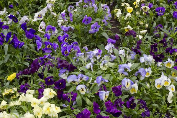 Yağmur bahar çiçek arka plan yeşil bitki Stok fotoğraf © vavlt