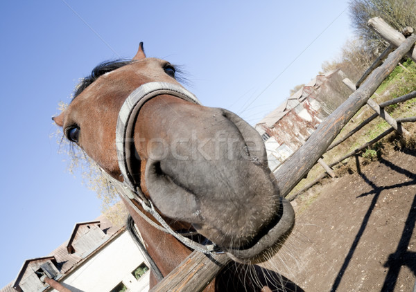 Portrait of a strange horse Stock photo © vavlt