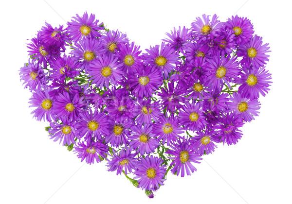 Heart from  magenta chrysanthemums  Stock photo © vavlt