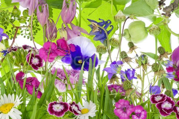 Olağandışı fantastik küçük bahçe çiçekler bitkiler Stok fotoğraf © vavlt