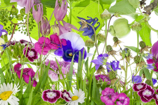 Insólito fantástico pequeño jardín flores plantas Foto stock © vavlt