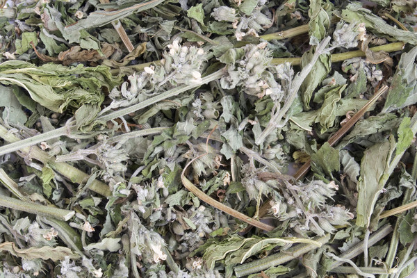 Mint herbal  tea background Stock photo © vavlt