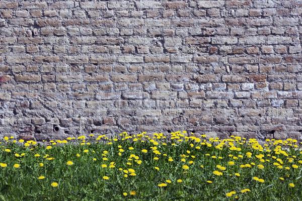 Velho amarelo tijolos parede leão primavera Foto stock © vavlt