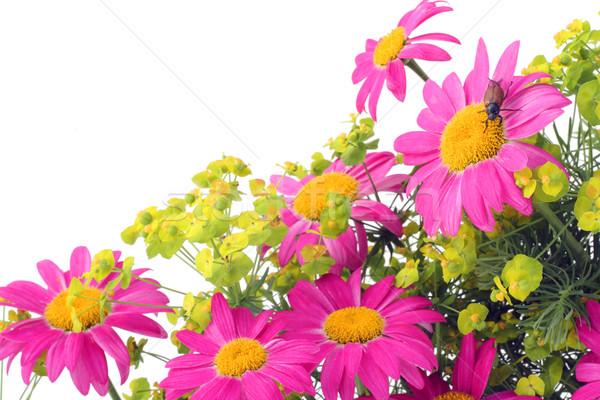Rózsaszín rovar kártya ritka képeslap makró Stock fotó © vavlt