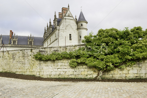 Old castle and tree Stock photo © vavlt