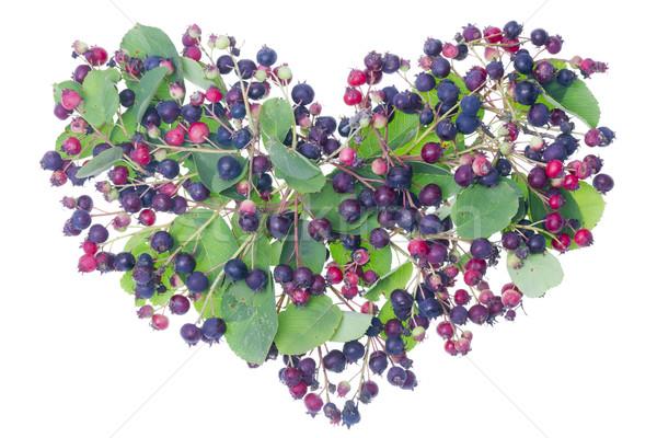 Erdő bogyók szív igazi vad piros Stock fotó © vavlt