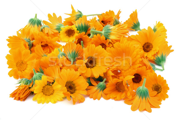 Calendula flowers isolated Stock photo © vavlt