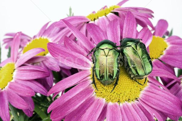 влюбленный зеленый ошибки два сидеть розовый Сток-фото © vavlt