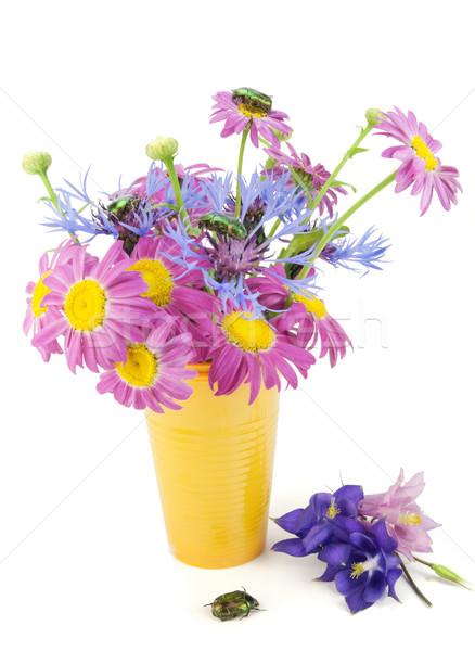 Flores erros rosa escuro azul mão Foto stock © vavlt
