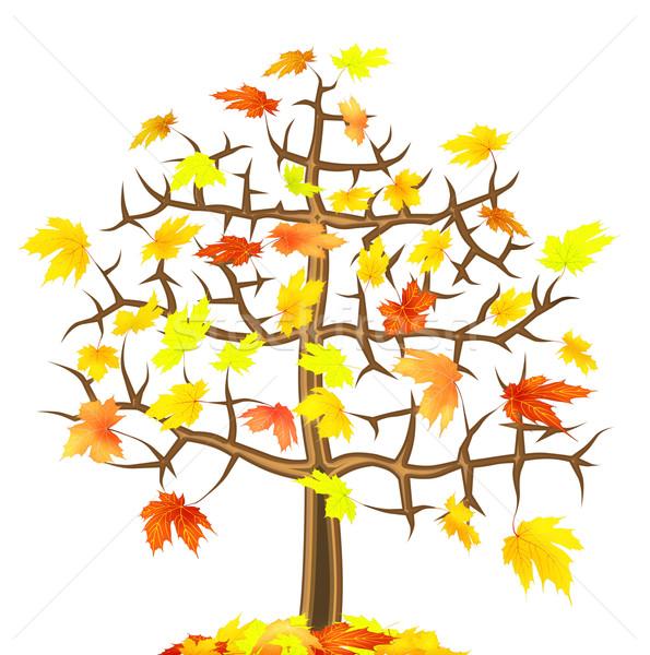 Magányos juhar ősz fa izolált absztrakt Stock fotó © vavlt