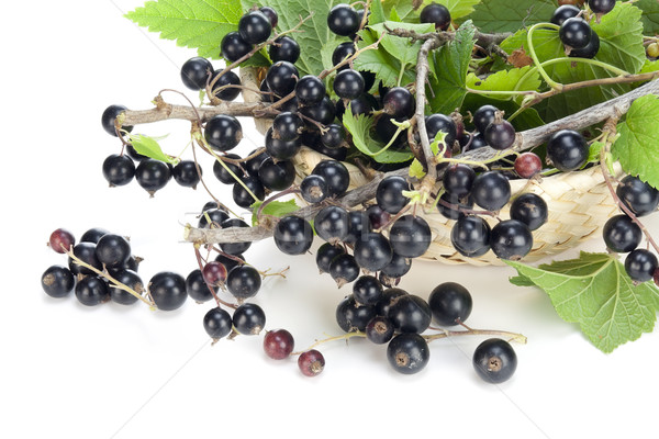 Real Black currant branches Stock photo © vavlt