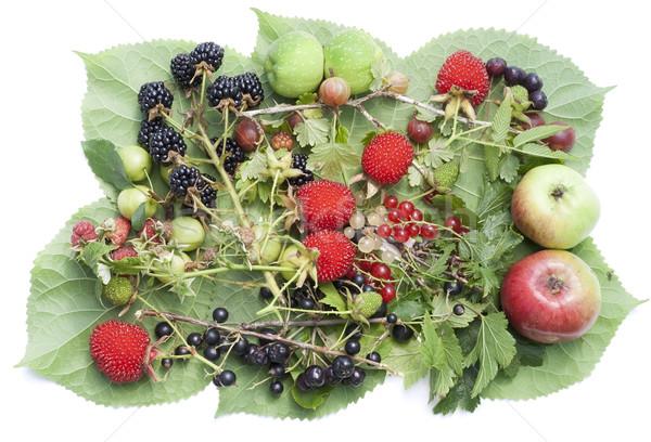 Gyümölcsök levelek keverék nyár augusztus egyszerű Stock fotó © vavlt