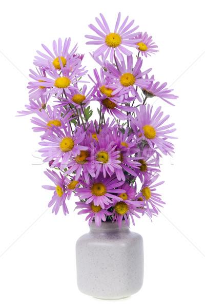 minimalistic  bouquet  - mini pink chrysanthemums flowers  Stock photo © vavlt