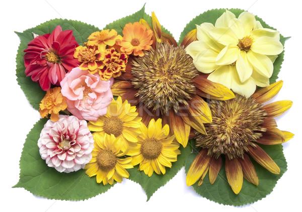 желтый лет растений цветы Сток-фото © vavlt