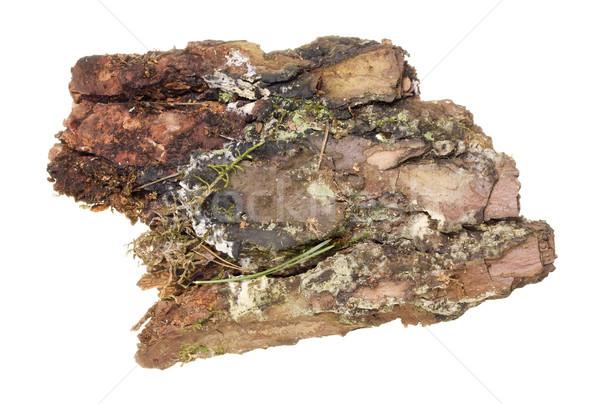 Old Pine  bark  Stock photo © vavlt