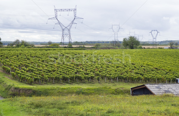 French vineyards landscape Stock photo © vavlt