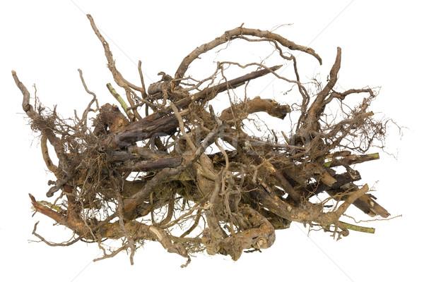 Wortels halloween scary geïsoleerd boom haren Stockfoto © vavlt
