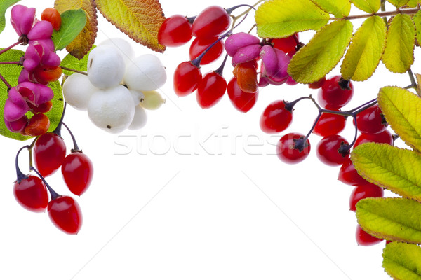 Stock photo: Autumn plants and  berries postcard