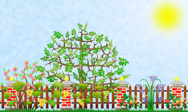 Fantasztikus kert darab absztrakt illusztráció kollázs Stock fotó © vavlt