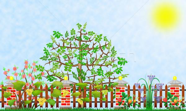 Fantastisch tuin fragment abstract illustratie collage Stockfoto © vavlt