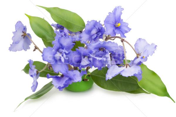 Gentle blue violets flowers Stock photo © vavlt