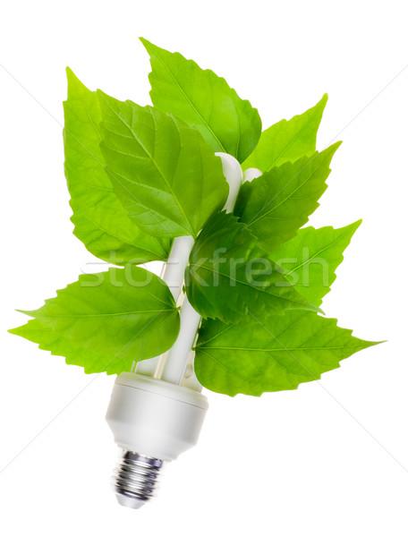 Groene energie elektrische lamp groene bladeren geïsoleerd witte Stockfoto © vavlt
