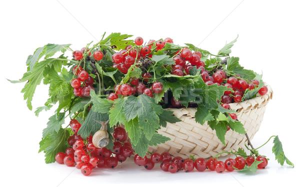Kırmızı frenk üzümü sepet olgun yalan Stok fotoğraf © vavlt