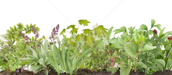 Todo plantas árbol joven cama jóvenes primavera Foto stock © vavlt