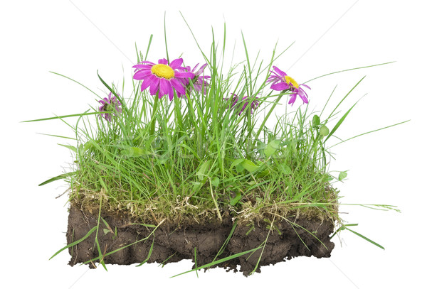 Bunch of lawn-  my EARTH concept Stock photo © vavlt