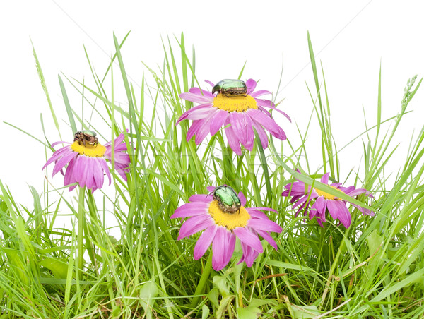 Small slice of a meadow  Stock photo © vavlt