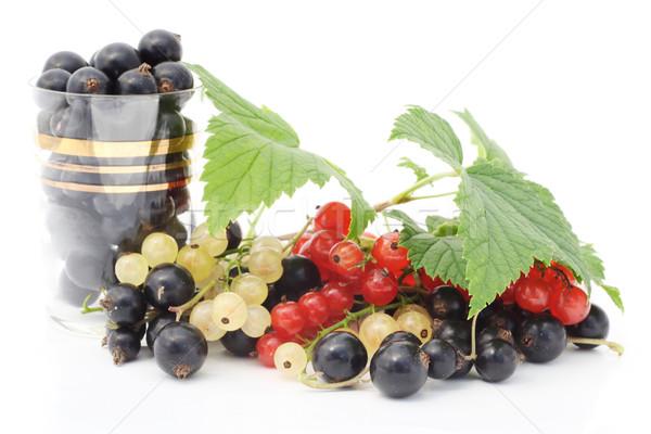 Fekete piros fehér ribiszke bogyók izolált Stock fotó © vavlt