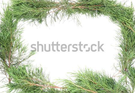 кадр зеленый изолированный белый дерево Сток-фото © vavlt