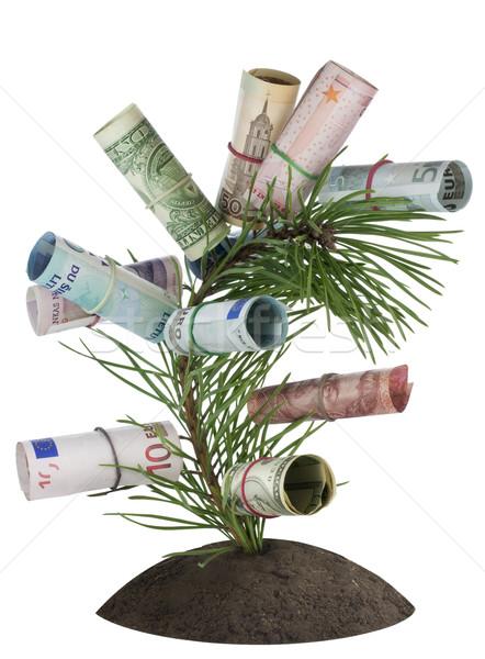 денежный дерево кровать Рождества украшенный деньги Сток-фото © vavlt