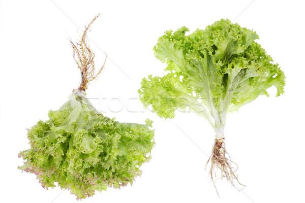 Saláta kicsi bokrok gyökerek izolált kettő Stock fotó © vavlt