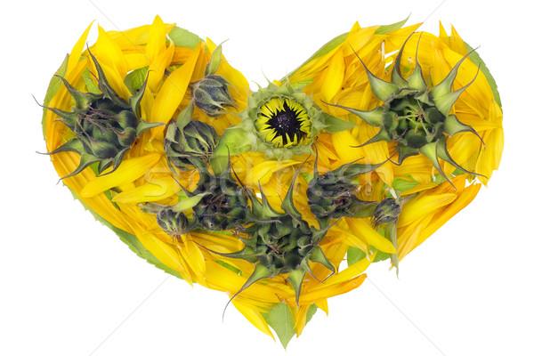 Abstract sunflowers heart Stock photo © vavlt