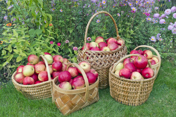 Red sweet apples in baskets Stock photo © vavlt