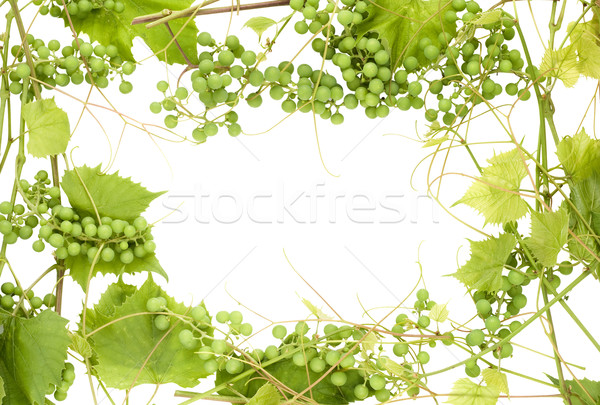 Frame from unripe green grapes Stock photo © vavlt