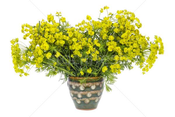 Strano impianto bouquet molti piccolo fiori gialli Foto d'archivio © vavlt