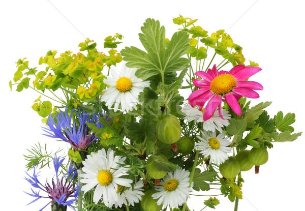 June bouquet Stock photo © vavlt