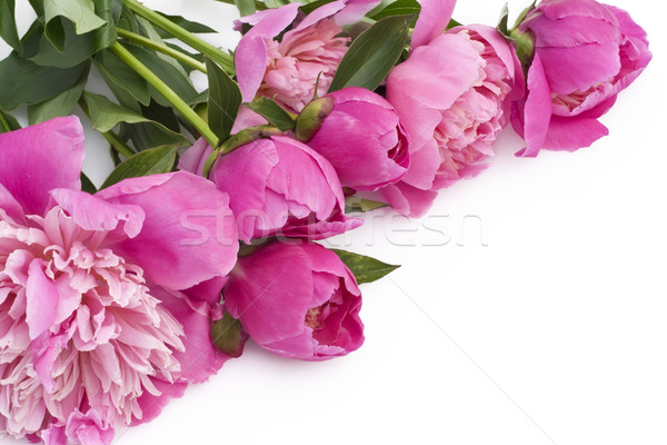 Bouquet of pink peonies on a white table Stock photo © vavlt