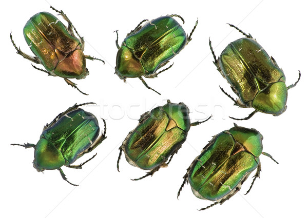 Smeraldo oro bug set sei isolato Foto d'archivio © vavlt