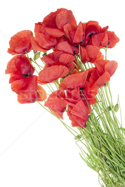 wild field  poppies bouquet Stock photo © vavlt