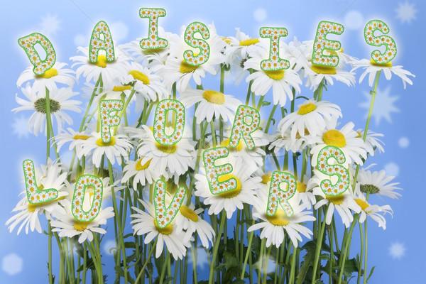 Százszorszépek szerelmespár virágmintás kifejezés kollázs virágok Stock fotó © vavlt