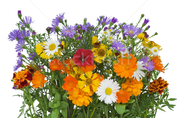 Bouquet from flowers which have lived till October. Stock photo © vavlt