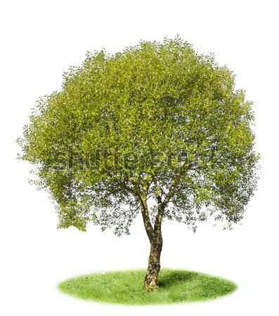изолированный дерево области луговой лет холме Сток-фото © vavlt
