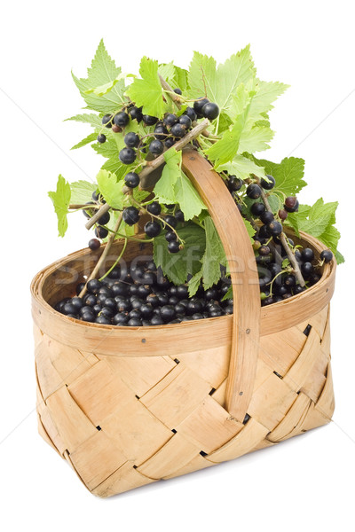 Berries of a black currant in a basket. Stock photo © vavlt