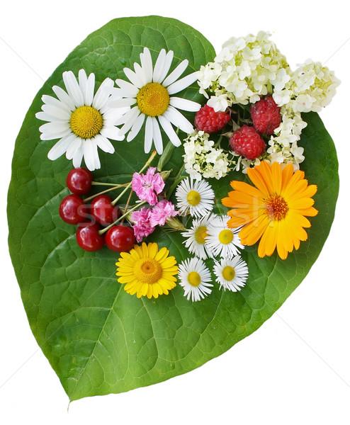 Yeşil kalp çiçekler meyve levha benzer Stok fotoğraf © vavlt